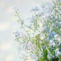 唯美可爱文艺鲜花