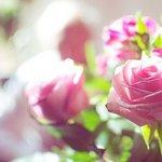 可爱花儿唯美意境图片
