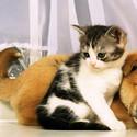 可爱萌货小动物图