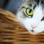 可爱小猫咪唯美意境图片