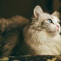 好看的猫咪唯美图
