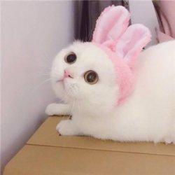 猫咪情侣图片一对可爱呆萌