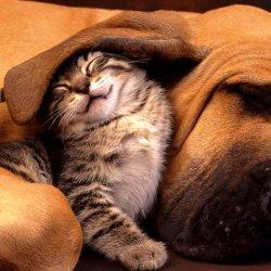 可爱的动物电脑桌面高清壁纸图片猫和狗