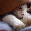 可爱猫咪主题桌面
