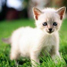 漂亮可爱猫咪高清主题壁纸