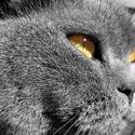 猫咪可爱主题桌面