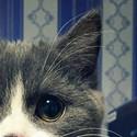 可爱猫咪高清手机