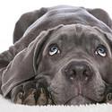 黑色狗狗主题高清