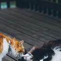 可爱小猫咪秀恩爱