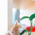 可爱萌物小猫咪高