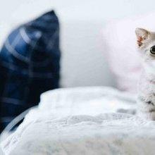 高清可爱小奶猫大眼睛迷人