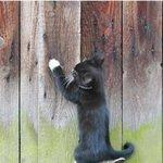 动物主题手机精美壁纸图