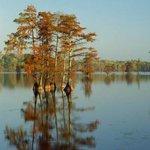 水中树唯美风景图片大全