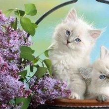 可爱小猫猫呆萌表情高清图