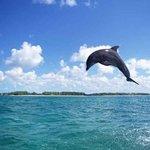 人类的好朋友海豚跃出水
