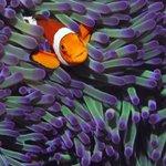 海洋里颜色鲜艳的鱼壁纸