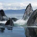 高清海洋动物鲸鱼和鲨鱼