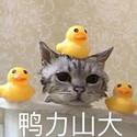 炒鸡可爱的动物表