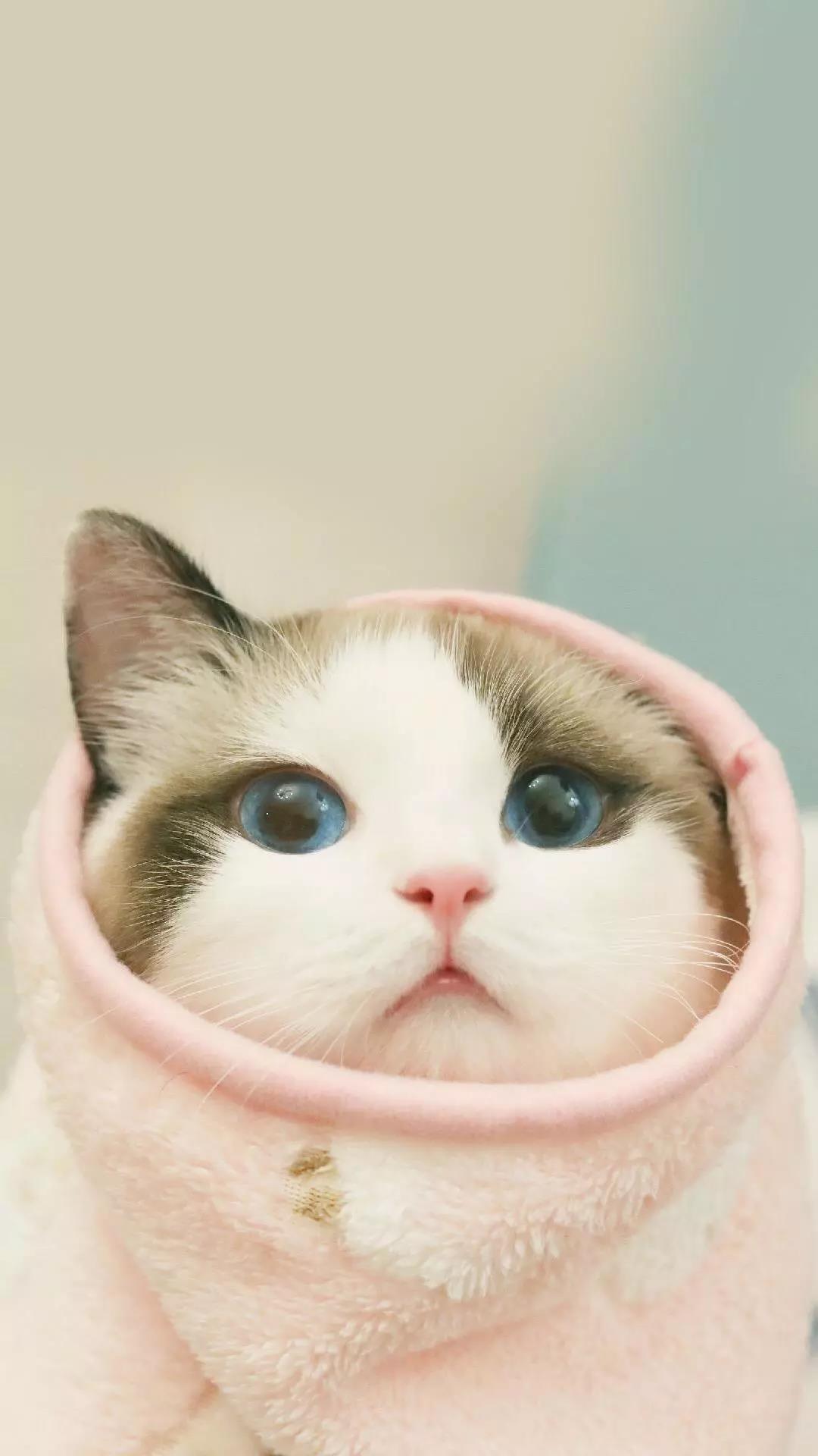 看完心情超好的可爱软萌动物手机壁纸图片