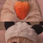 傲娇可爱的猫咪手机壁纸