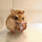 可爱有趣的动物头像图片