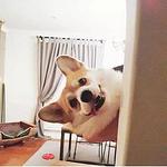 笑容满分的可爱宠物狗头