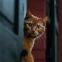 机灵可爱的胆小猫
