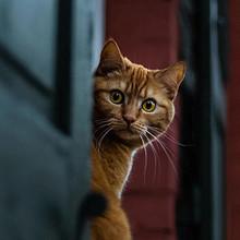 机灵可爱的胆小猫咪手机高