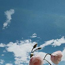 对着蓝色天空的花朵清新浪