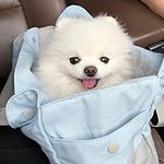 袋子里的可爱小白狗头像