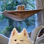 乖巧可爱的软萌狗狗动物