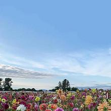 盛开的花田唯美风景手机壁
