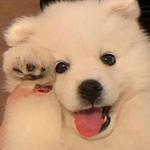 软萌可爱的白色小狗头像