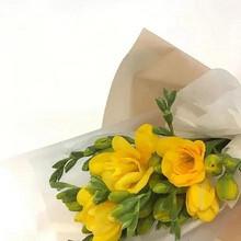 黄色花朵清新唯美亮眼朋友