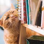活泼可爱的猫咪高清动物