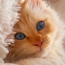 天真可爱的猫咪高清手机壁纸图片