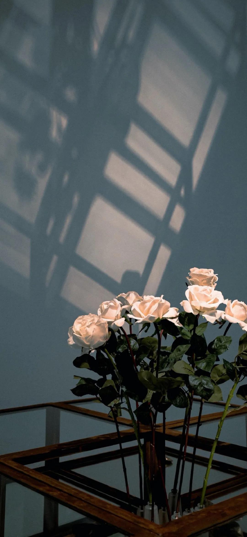 为生活增添色彩的花朵植物唯美高清手机壁纸图