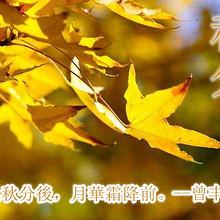 二十四节气之秋分唯美高清