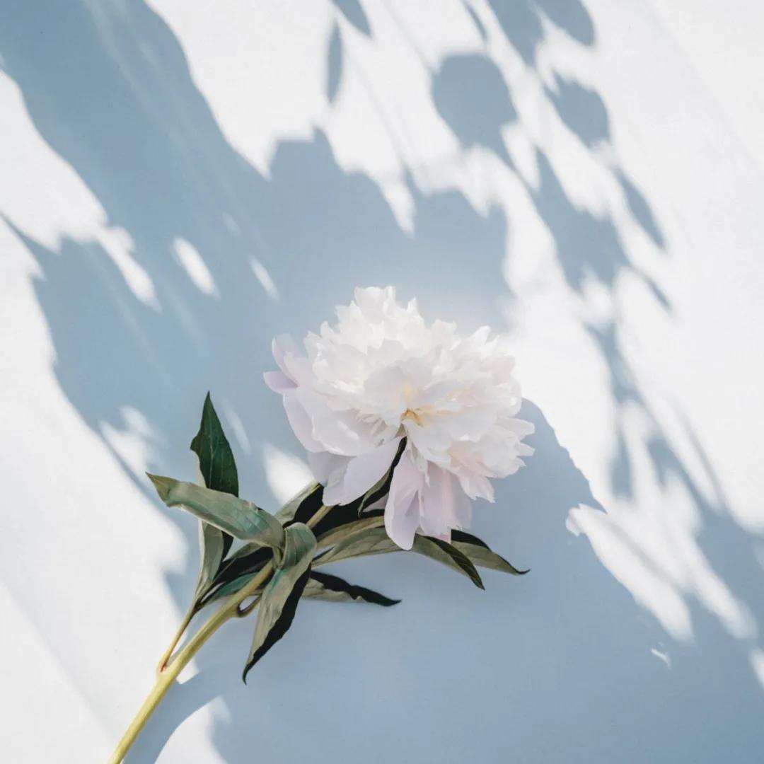 途径了我的盛放之小清新唯美的一枝花头像图片