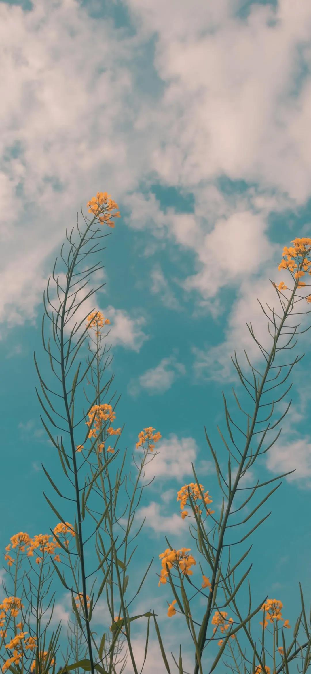盛开的花朵唯美高清手机壁纸图片