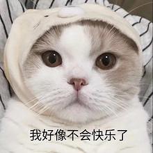 可爱猫咪文字表情包图片