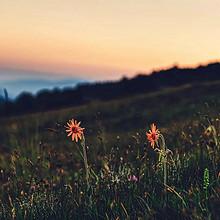 让内心平静的清新户外风景唯美图片
